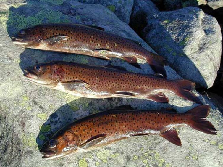 рыбалка сохондо